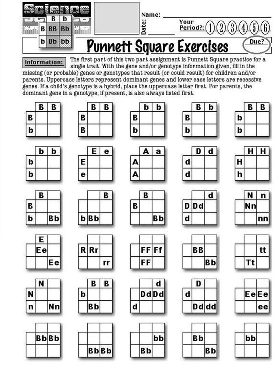 Printables Punnett Square Worksheet biology exercise and keys on pinterest worksheets about punnett squares square exercises 1