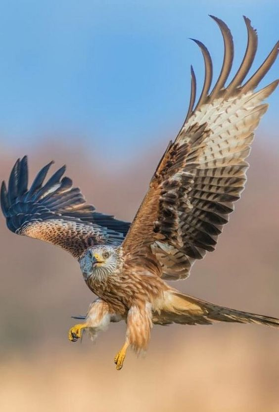 Famous Types of Eagles in The World With Awesome Pictures #Eagles #TypesofEagles