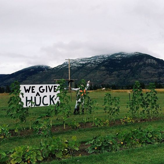 We Give a Huck! - Huckleberry country - Southern Montana