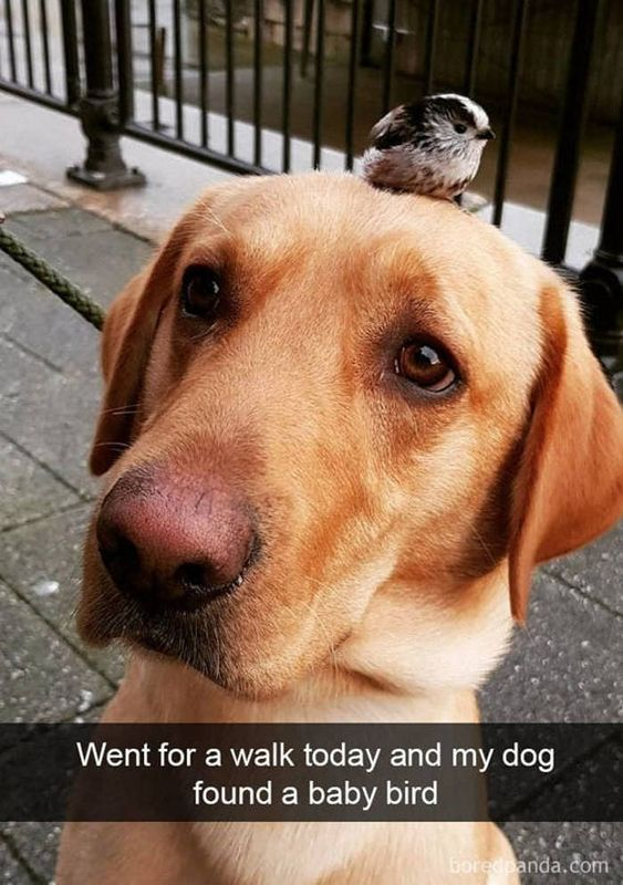 40 Funny Dog Snapchats That You Need To See Right Now Check More