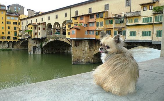 One Town In Italy Has The Sense To Offer Tax Breaks For Dog Adoption