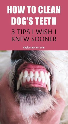 Pin By Lisa Ruvola On Ren And Rylee In 2020 Dog Teeth Cleaning