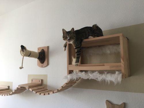 Pin Von Ronja Marie Kockmann Auf Katzenmobel In 2020 Kratzbaum