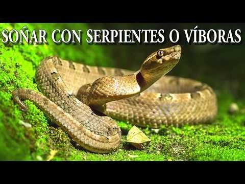 Que Significa Soñar Con Serpientes Víboras O Culebras Significado De Los Sueños Youtube Pit Viper Poisonous Snakes Snake