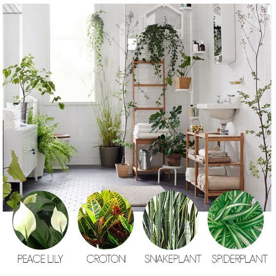 Air Purifying Plants For Bathroom: The Stand, Conditioning And Light Bathroom On Pinterest