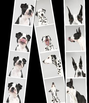 Pet Photobooth | The Pursuit of Style