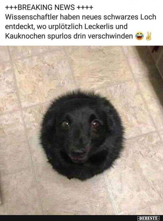 Idee Von Christoph Kreidl Auf Witzig Lustige Welpen Tierwitze Hund Funnies
