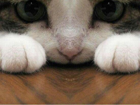 Love Cat Paw ♥