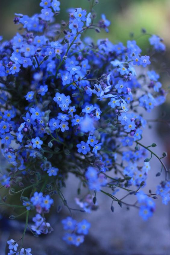 forget-me-not flowers. Your flowers son.. Blue your favorite color and I will never forget you.. <3: