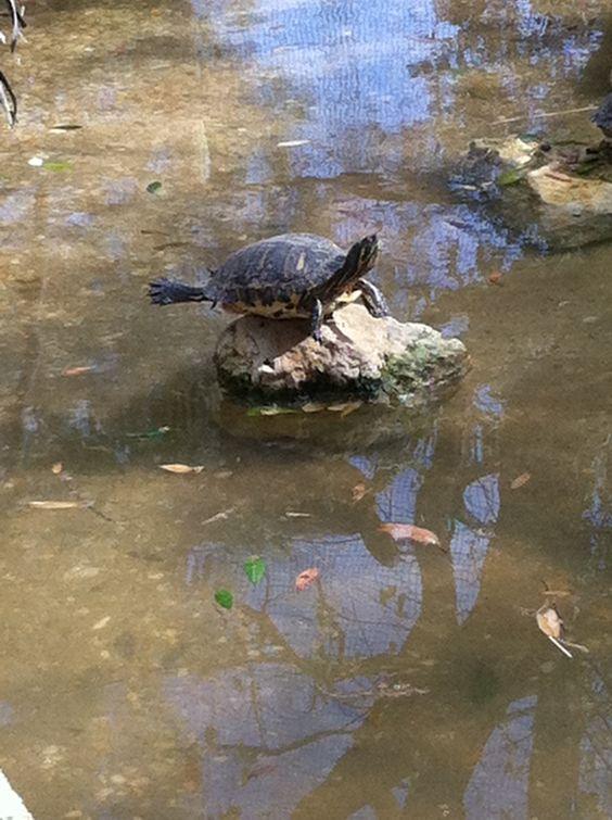 Montgomery Zoo #fabulousturtle #reptileonfleek