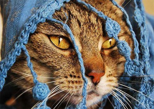 Fotografías de gatos » http://bit.ly/1uZriXw