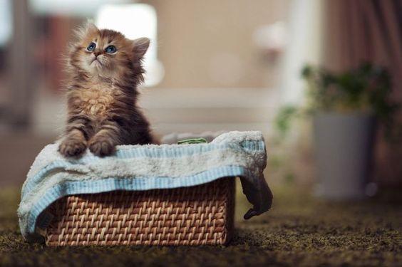 What a Funny Little Kitten! - Izismile.com