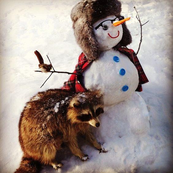 Wandawega snowfriend-what an excellent shot!