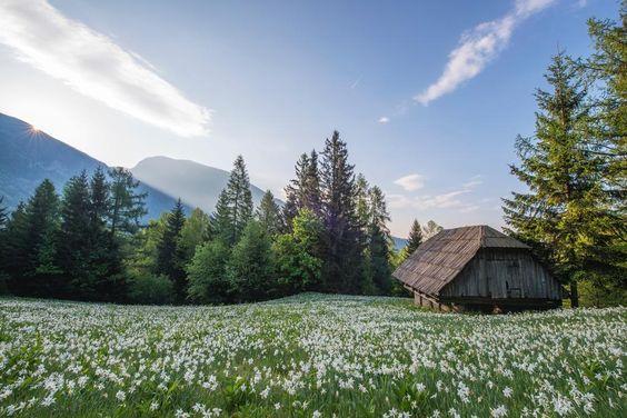 Die Dichternarzisse (http://galasearch.de/plants/11838-narcissus-poeticus) kommt v.a. in Wiesen in großflächigem und individuenreichen Beständen zur Geltung. Hier ist sie als natürlicher Bestandteil einer Bergwiese zu sehen - und das sollte der Maßstab für die Gartenverwendung sein!: