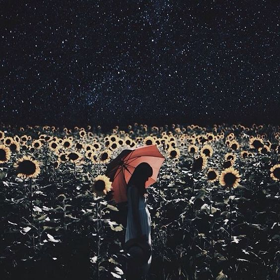 VII. 30. 2015  ______ IG ✦  No Frontiers ✦ Photo published by @Shinichi38 ✦ Sunflowers Bloom in Starlight  _____ ✦ Please visit their wonderful and inspirational gallery!  ______ ✦ Admin: ig_costarica team ⊙ Official Tag:  #IG_COSTARICA  #IG_CLUBAWARD  #IG_WORLDCLUB ✦ Member IG_WORLDCLUB ⊙ If you want open the Ig Account write us: info@igworldclub.com  ______ ⊙ Follow @ig_worldclub  ______