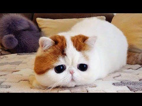 Smeshnye Koty I Kotyata Milahi Koty Zabavnoe Video Cute Kittens Videos Milye Kotiki Kotyata Zhivotnye