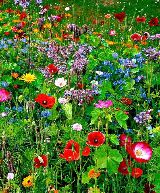 Frömatta Vilda blommor Mix