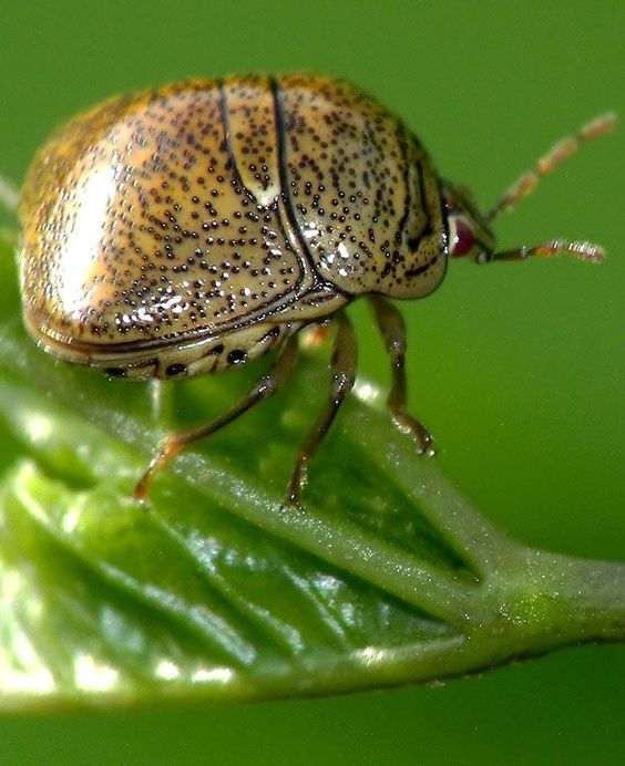 Do you know what kind of insect this is and how it relates to your garden?