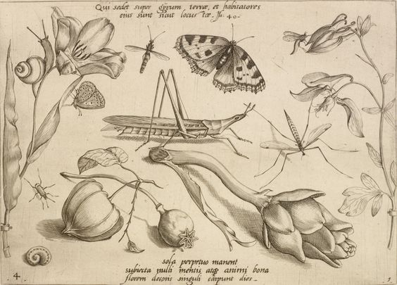 "Jacob Hoefnagel, Flemish, 1575 - c.a. 1630   ""It is he who sits above the circle of the earth, and its inhabitants are like grasshoppers. Isaiah 40 (Qui sedet super gyrum terrae et habitatores eius sunt sicut locustae Isa[ias] 40), from ""Archetypa studiaque patris Georgii Hoefnagelii"", 1592"