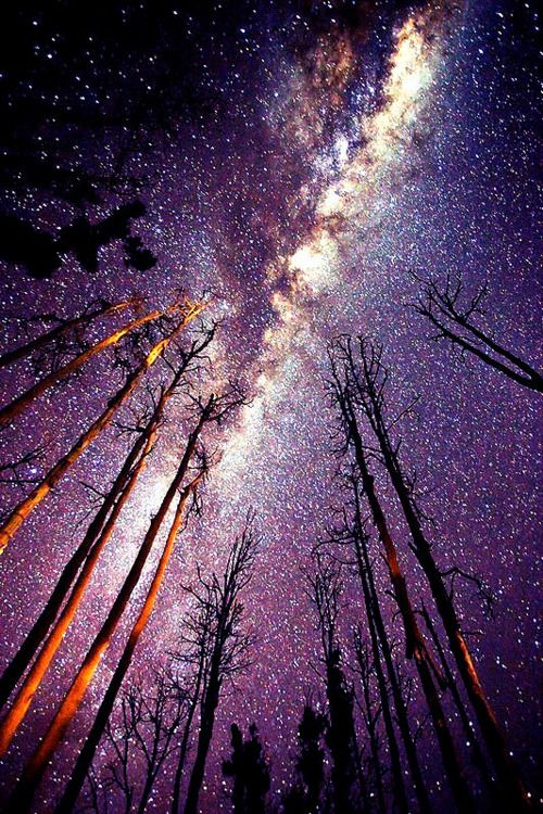 I can't believe there's some places where you can't see the stars at night. Such incredible beauty that reminds us how small we are.