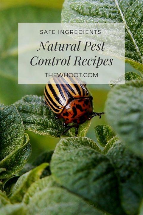 Pest Control Advertising Pest Control Lawn Spray Termite And Pest Control Near Me Pest Control Compan Natural Pest Control Pest Control Best Pest Control