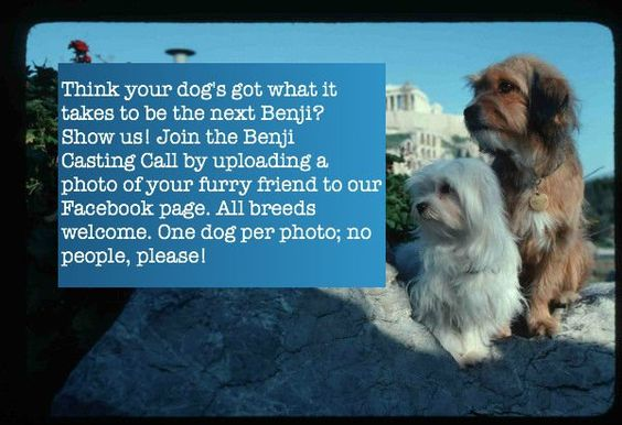 Is your dog the next Benji? For full details, visit http://on.fb.me/LF1F3r
