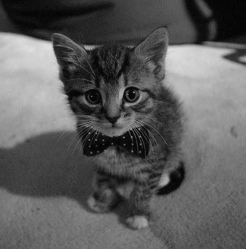 El gato misifu!