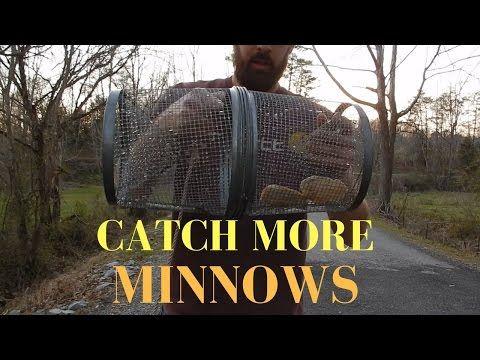 Minnow Trap Review Black Vs Silver Youtube Minnow Trap Fishing Adventure Traps
