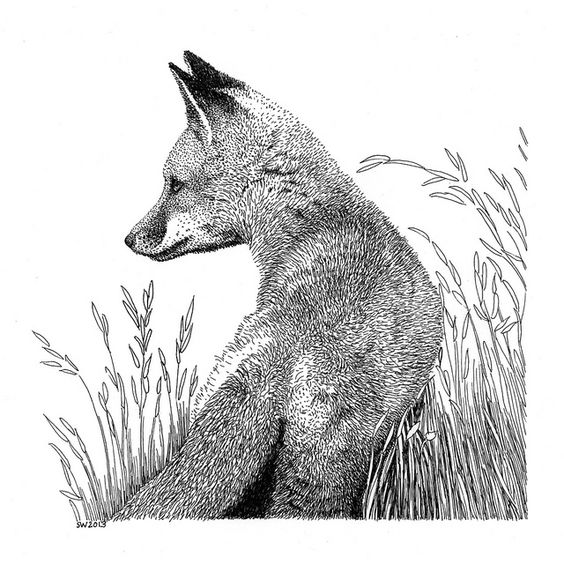 Fox in Grass Pen and Ink Drawing