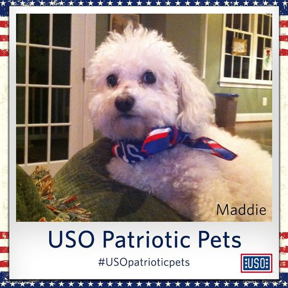 Maddie has been supporting troops and those who support our troops for more than 12 years. Talk about patriotic!