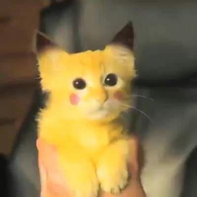 Pokemon kitten