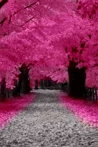 ✯ Pink Trees ✯: