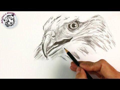 Como Dibujar Un Halcon Con Lapiz Paso A Paso Youtube Como Dibujar A Lapiz Como Dibujar Como Dibujar Animales