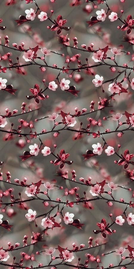 Beauty Of Old Things And Mystery Of Life Flowers Beautiful Nature Wallpaper Floral Wallpaper Iphone Floral Wallpaper