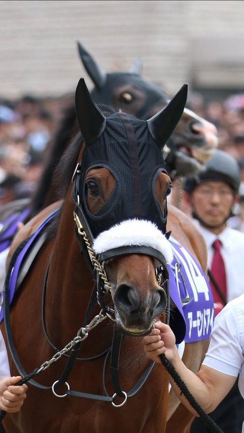 パドックでアーモンドアイを見るダノンプレミアムの目付きが卑猥すぎると話題 horses golden horse racing