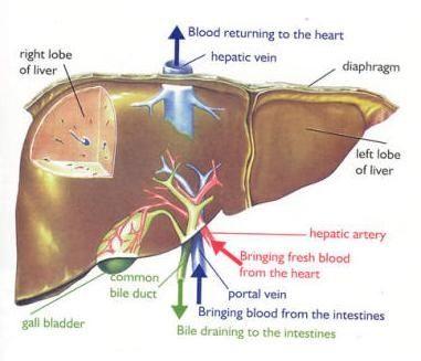 images about Vascular Nursing on Pinterest