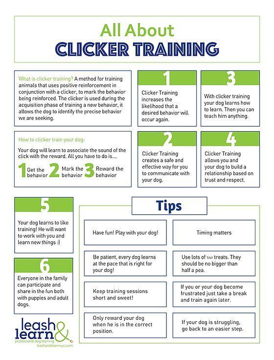 Leash And Learn Free Training Tips Nyc Dog Training Dog