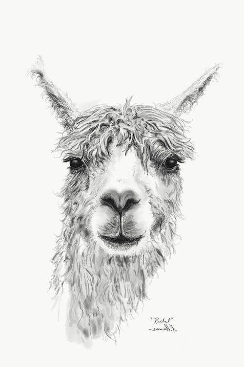 Rachel Canvas Print By Kristin Llamas With Images Llama