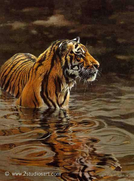 Tiger painting by Matthew Hillier - Wildlife & Landscape ...