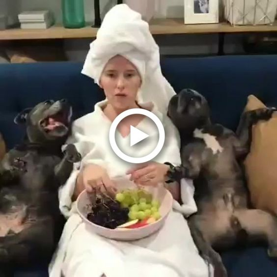 Cães assistindo alguma coisa e comendo uvas