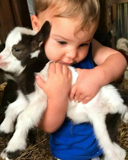 Hugging Animal Animals For Kids Animals Beautiful Cute Animals
