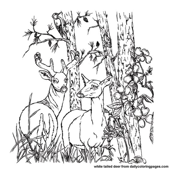 deer mouse printable coloring pages - photo#32