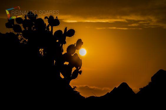 sol de espinhos