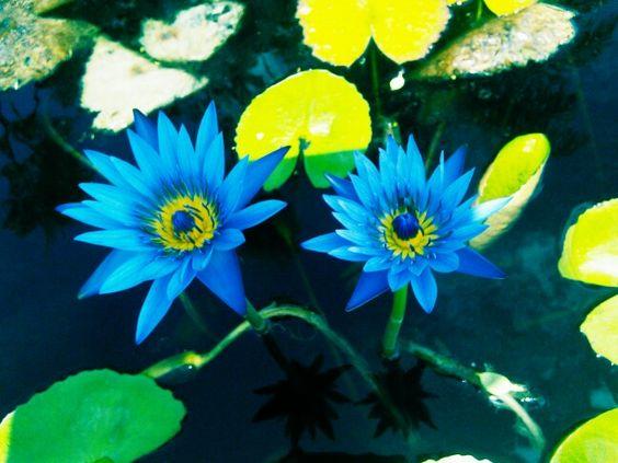Naples Botanical Gardens!
