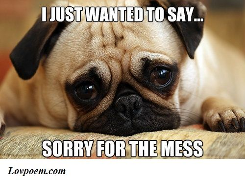 70 Memes About Being Sorry For Him Or Her Sweet Memes Miss You Funny Missing You Memes I Miss You Meme