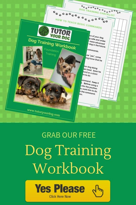 3 Simple Steps To Teach Your Dog A Solid Recall Online Dog