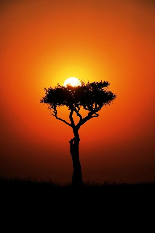 """Mara sunrise, a nest for the Sun."" by Russ Valentine:"