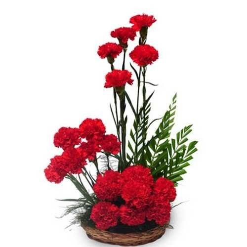 Basket Arrangement of 20 Red carnations. Arrangement includes 20 red carnations with a basket which will be a best option to convey your love & affection.