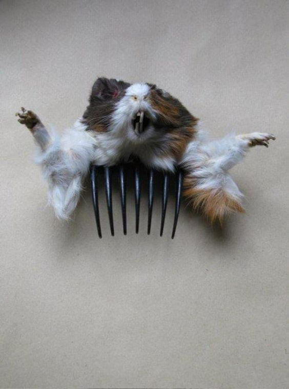 Bad hair day? Here, throw this dead animal in there and no one will notice!