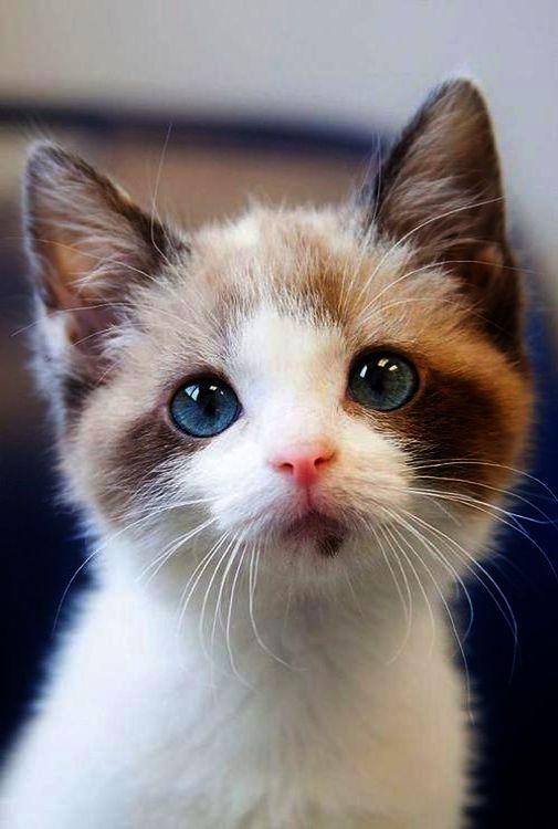 Babyanimals Cute Cartoon Animals With Big Eyes To Draw Versus Cutest Baby Kittens In The World Every How To Dr In 2020 Kittens Cutest Baby Baby Kittens Kittens Cutest